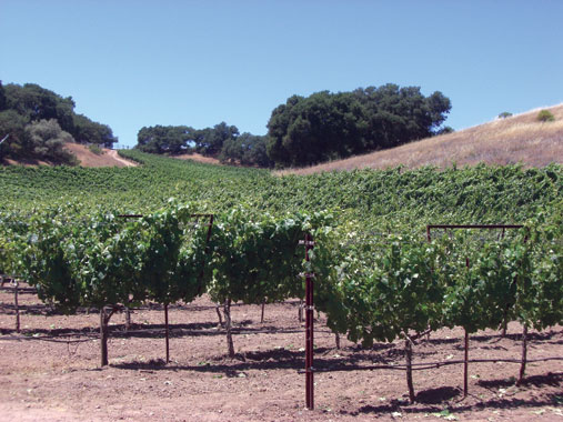 vineyard_landscape.jpg